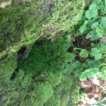Das wächst alles am Baum