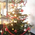 Unser Tannenbaum leuchtete schon am Morgen beim Adventssingen ganz festlich.
